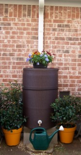 Brown Rain Barrel